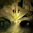 Lily by Gilberte