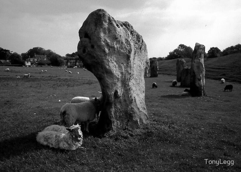 Avebury -- scraggy sheep & ancient stones. by TonyLegg