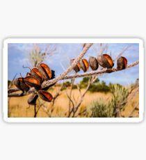 Seeds of the Desert - Central Australia #2 Sticker