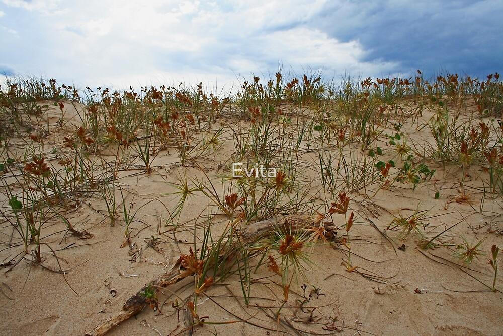 On A Sandy Beach by Evita
