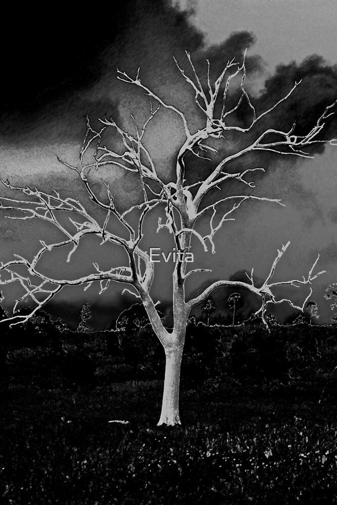 In Black & White by Evita