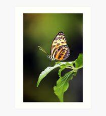 Harmonia Tiger Wing Art Print