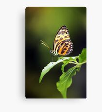Harmonia Tiger Wing Canvas Print