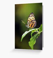 Harmonia Tiger Wing Greeting Card