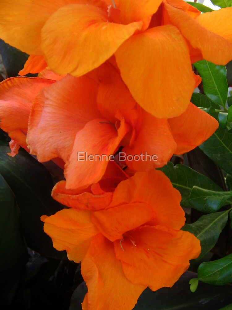 Bless You by Elenne Boothe