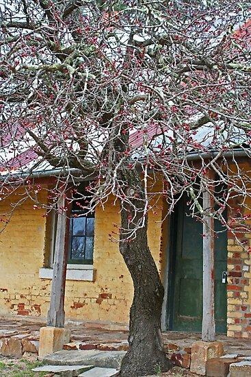Old Inn by Evita