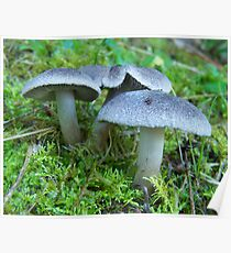 Fairy Dwellings Poster