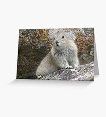 Baby Pika Greeting Card