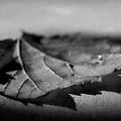 Leaf by Shannan Edwards