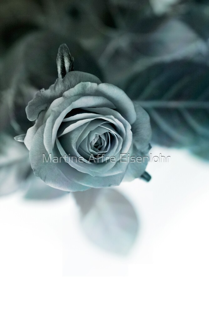 Black and white rose by Martine Affre Eisenlohr