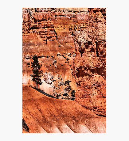 Natural Selection Photographic Print