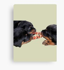 Loving and Sharing Tug Of War Rottweiler Puppies Vector Canvas Print