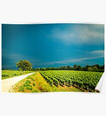Storm over the vineyard Poster