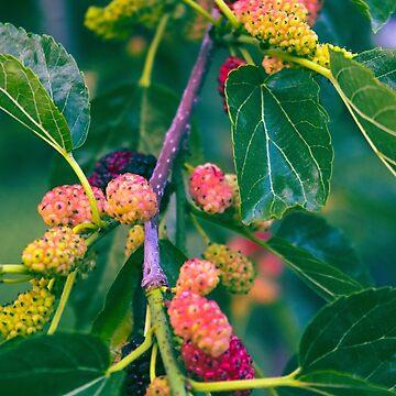 Mulberry by danafazz