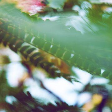 Foliage by danafazz