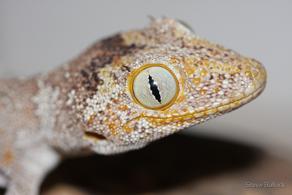 Big Eyes! by Steve Bullock