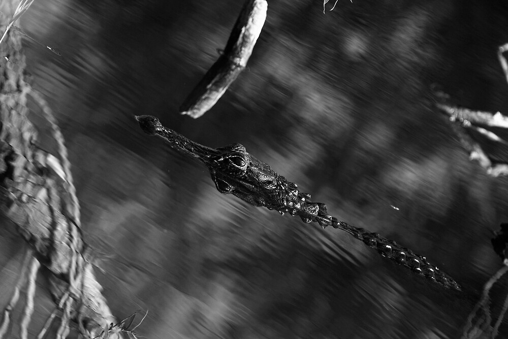 Predator Abstract by Denis Wagovich