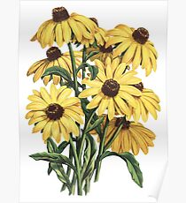 Black Eyed Susan Yellow Flowers Painting Art Poster