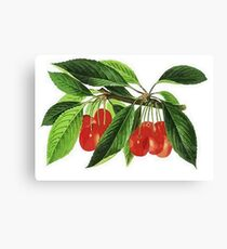 Red Cherries Vector on White Background Canvas Print