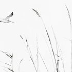 Curlew and grasses by nadine henley