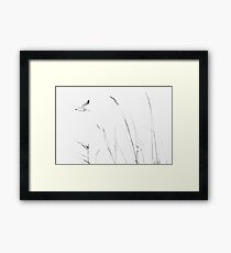 Curlew and grasses Framed Print