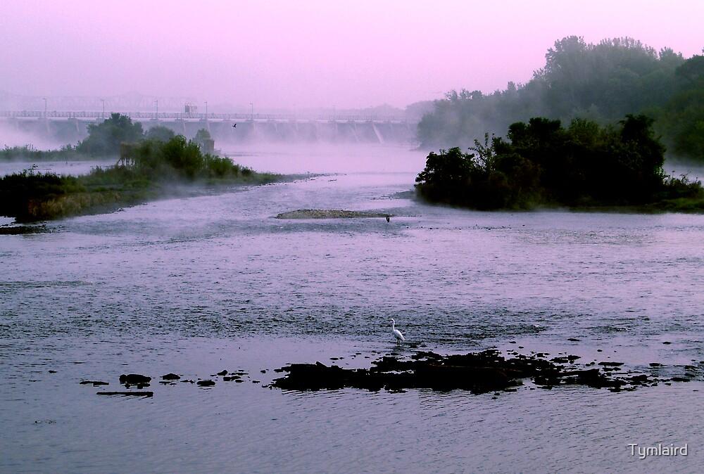 White bird on foggy river by Tymlaird