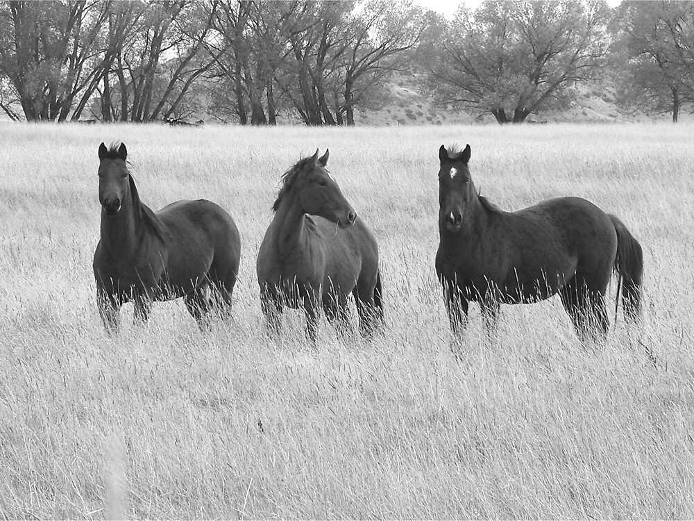 Tres Caballos by Alex  DeVilbiss