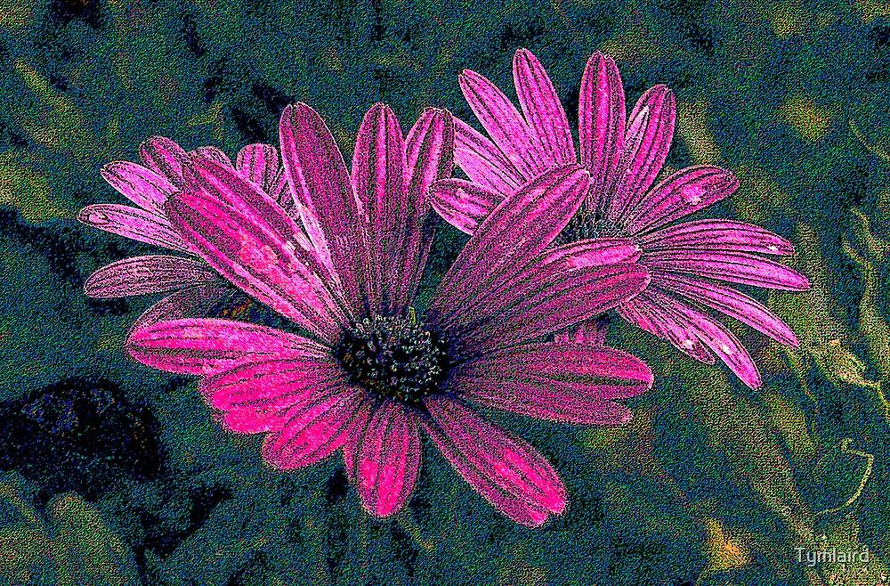 Purple Cornflower by Tymlaird