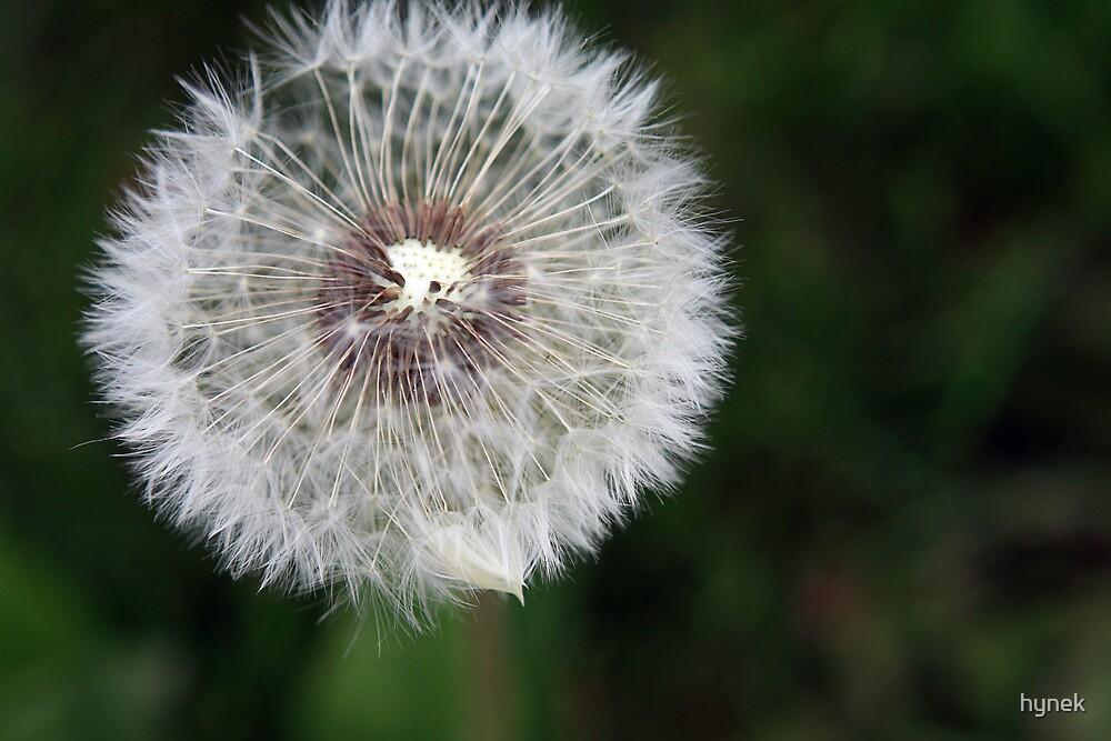 Blowball by hynek