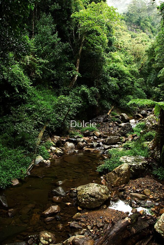 Minnamurra Rain Forest no: 2 by Dulcie
