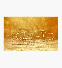 "THE ""THREE"" LITTLE LION CUBS, a Last light capture - THE LION – Panthera leo Photographic Print"
