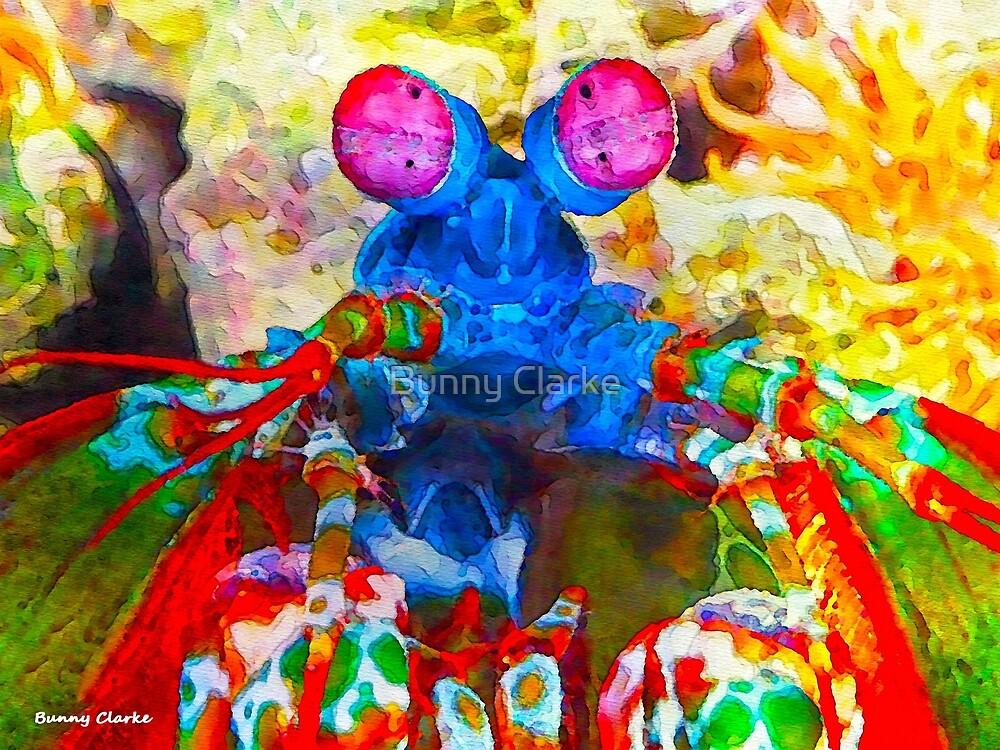 Ocean Creatures:  Peacock Mantis Shrimp by Bunny Clarke