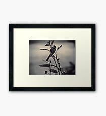 Charcoal Chickadee Framed Print