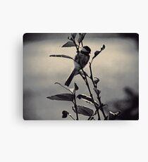 Charcoal Chickadee Canvas Print