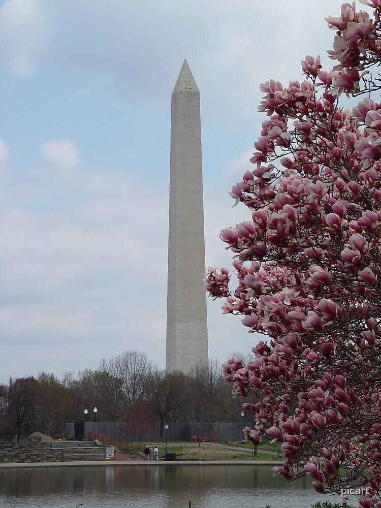 Washington Blossom by picart