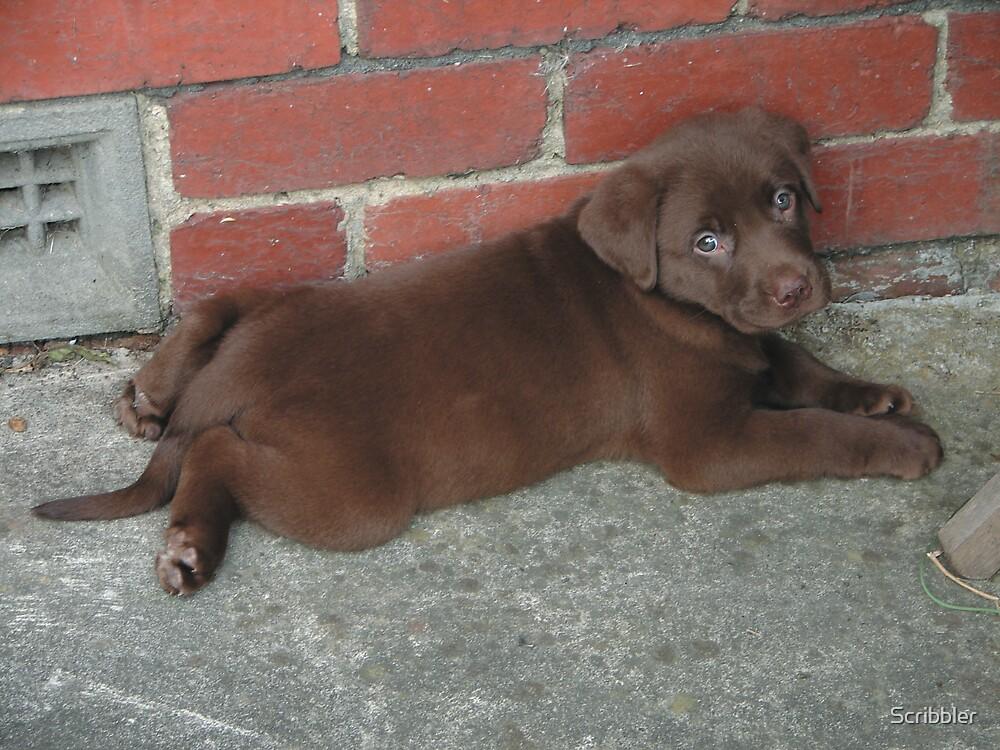 Labrador Puppy by Scribbler