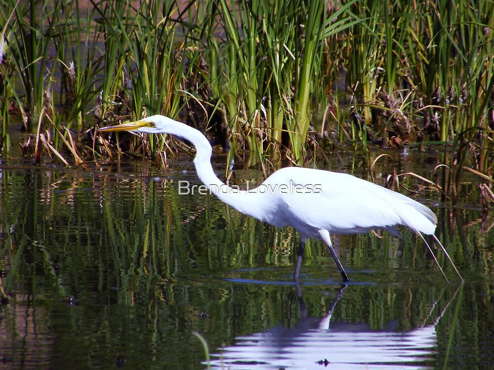 egret calm by Brenda Loveless