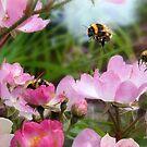 Three Bumble Bees by Morag Bates