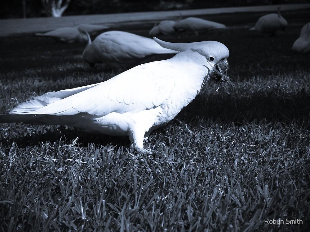 Cockatoo Blue by Robyn Smith