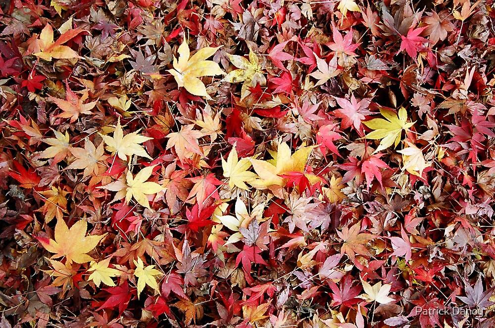 Autumn colors by Patrick Danoy