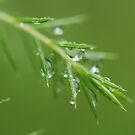 Delicate Drop by Bev Woodman