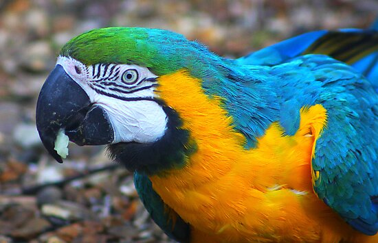 Parrot by jdmphotography