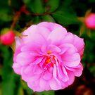 Rosa von Evita