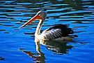 Pelikan von Evita