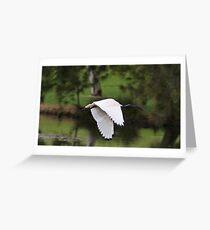 White Ibis In Flight Greeting Card