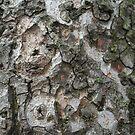 Bark Collage by JenniferC