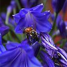 Beschäftigte Biene von Evita