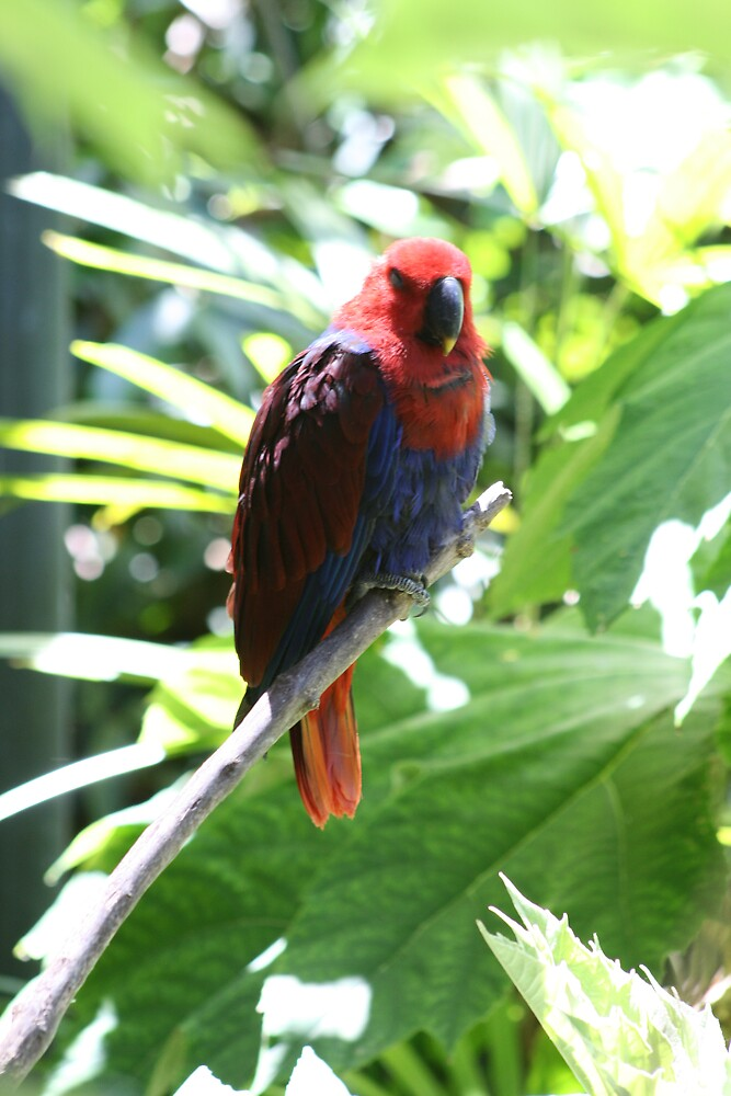 In the birdhouse by rainbowbrite