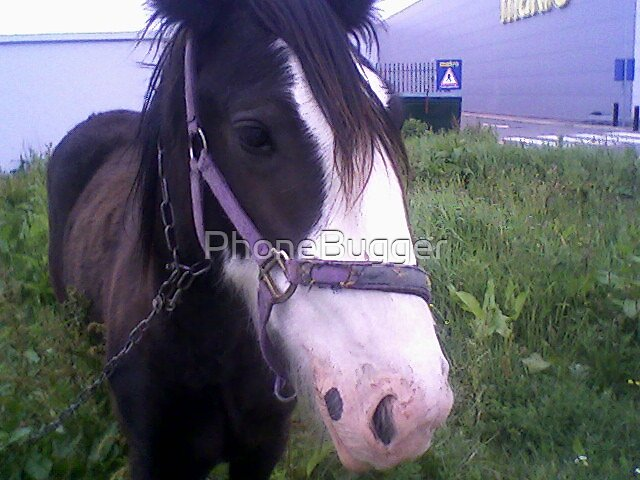gypsy horse. by PhoneBugger