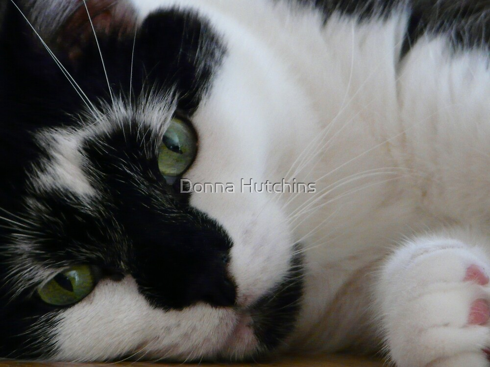 Do you love me? by Donna Hutchins